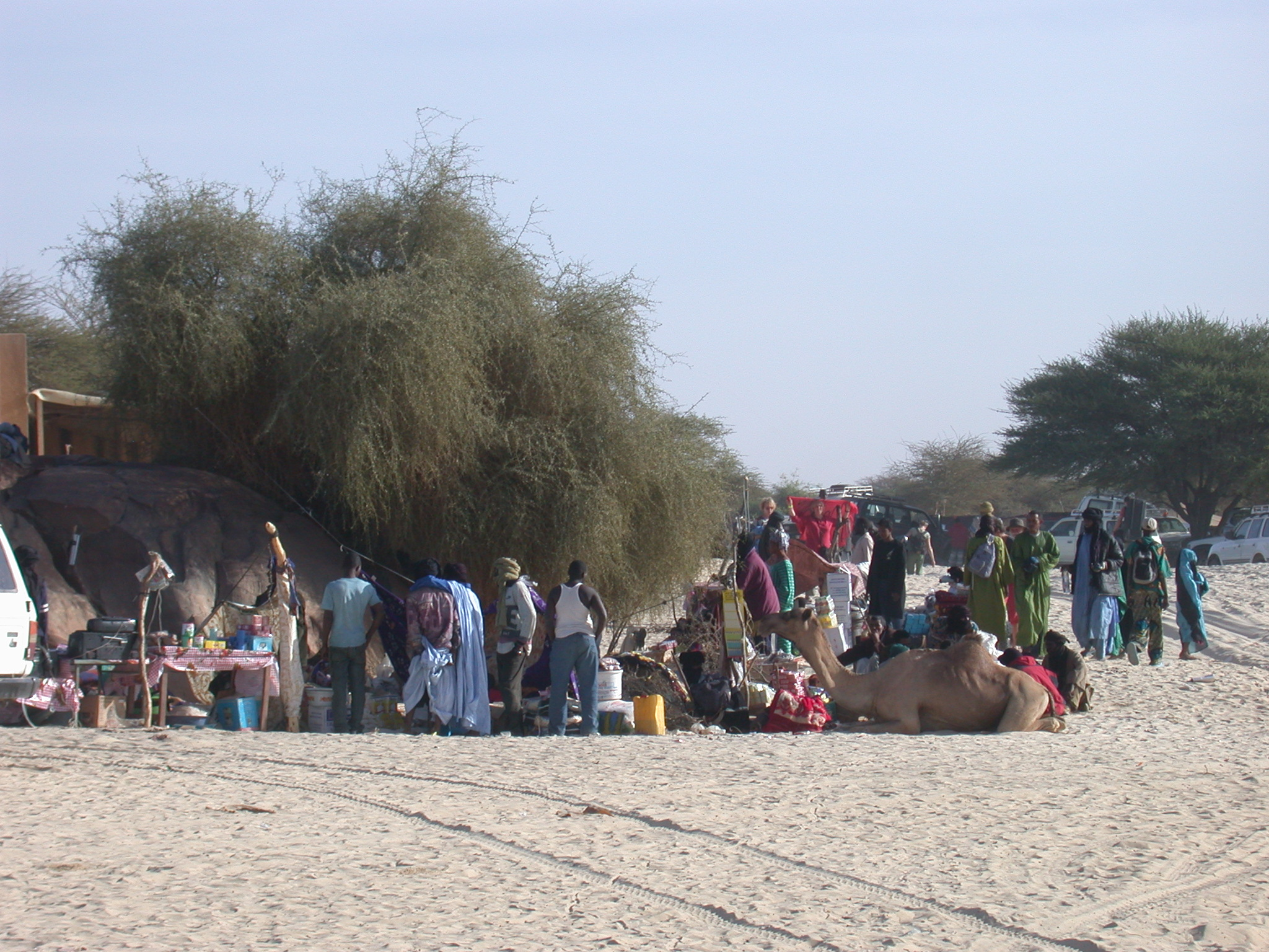 Attendees Gathering With Camel, Festival in the Desert, Essakane, Mali