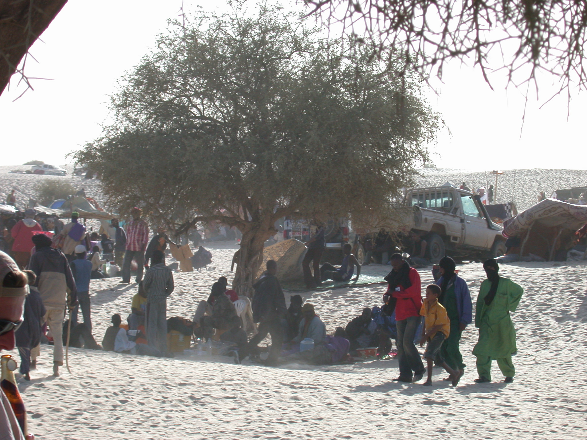 Attendees Gathering and Setting Up Traditional Tents, Festival in the Desert, Essakane, Mali