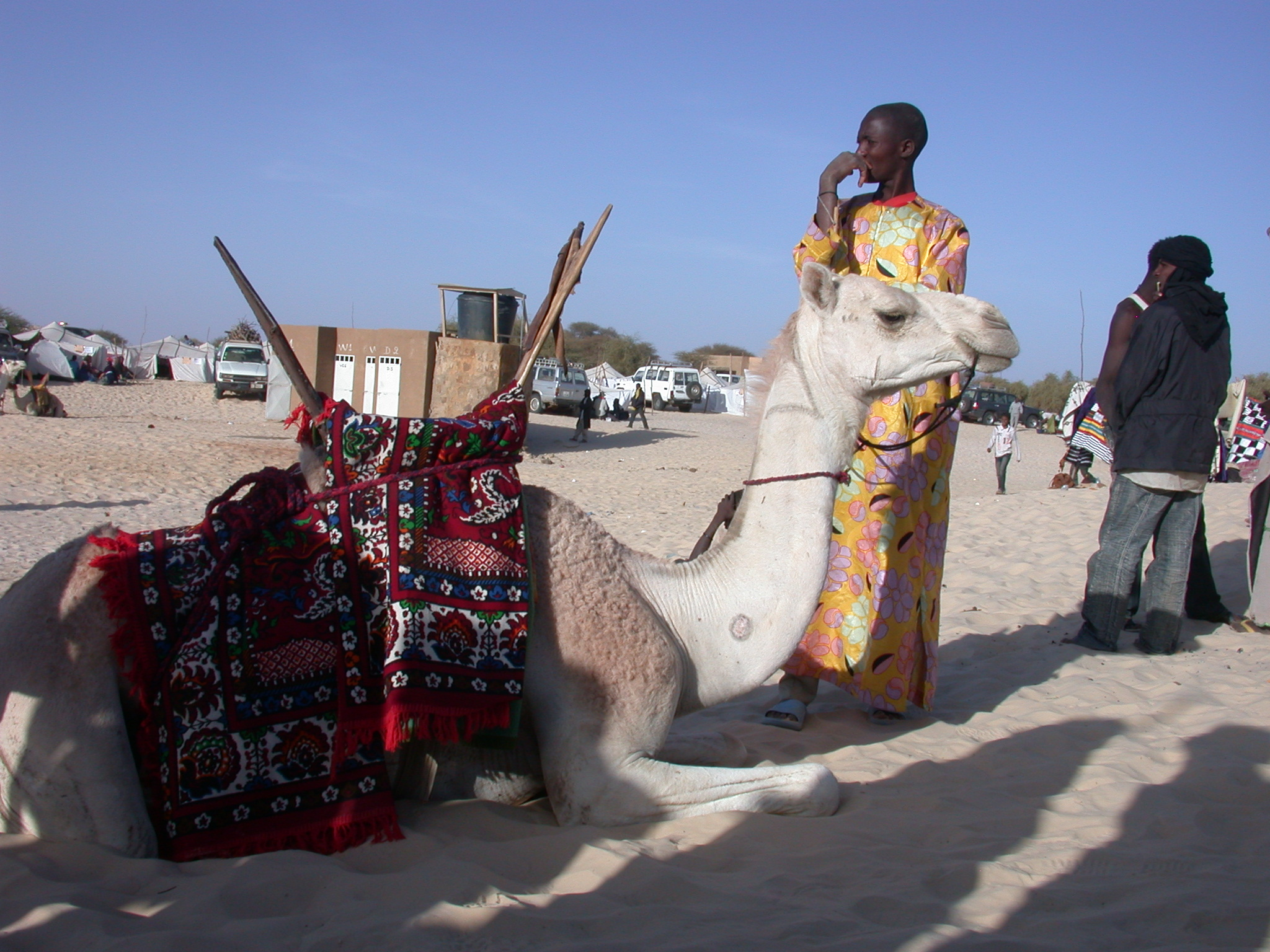 Seated Camel With Ornate Saddle and Colorfully Dressed Rider, Festival in the Desert, Essakane, Mali