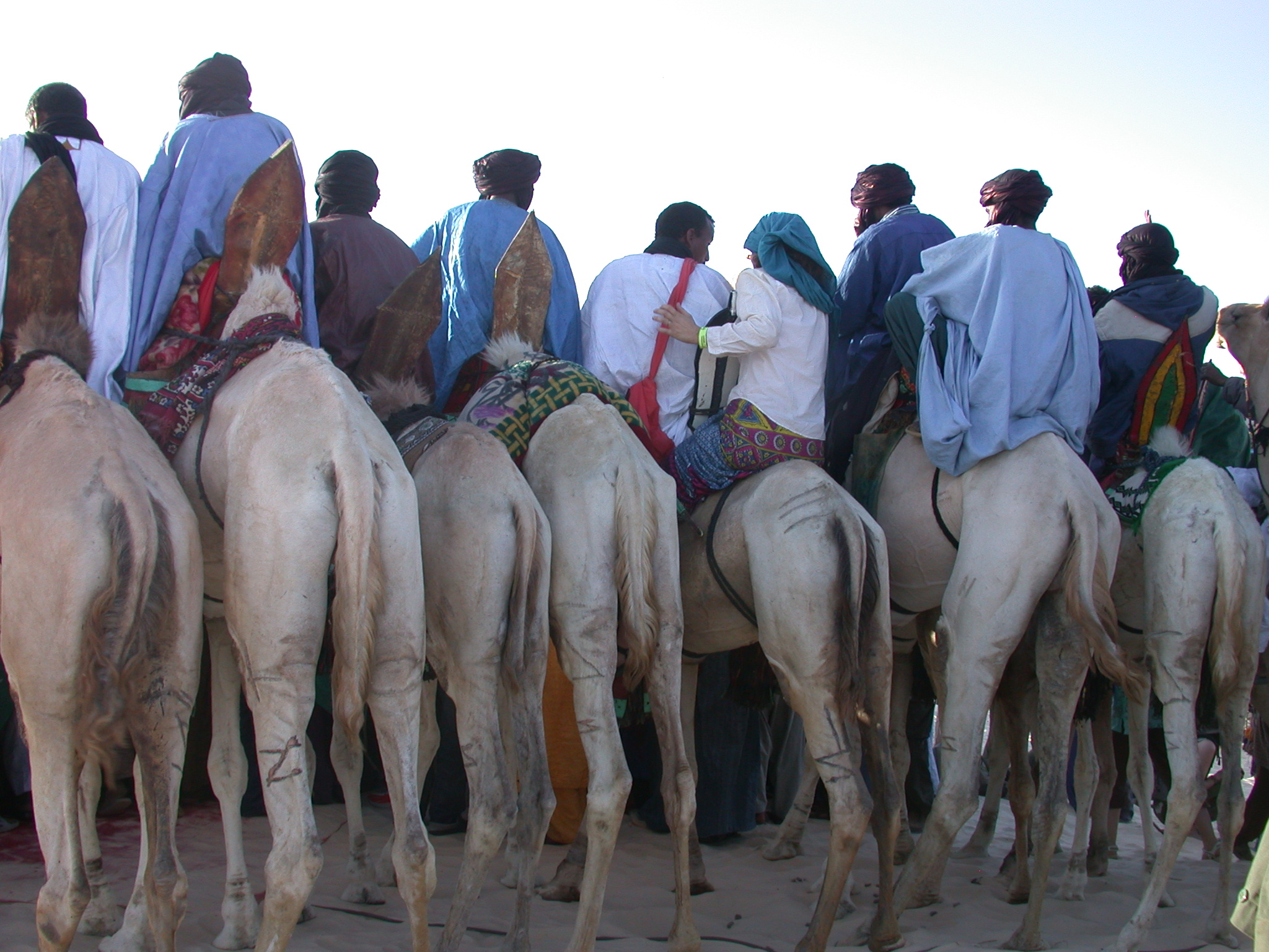 Hot Camel Butt, Preparing for Camel Race, Festival in the Desert, Essakane, Mali