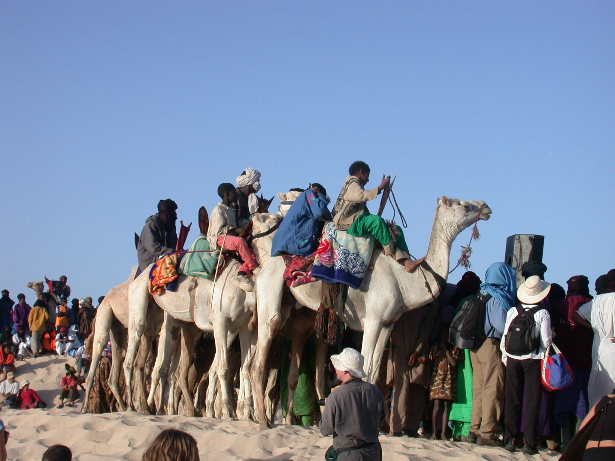 Preparing for Camel Race, Festival in the Desert, Essakane, Mali