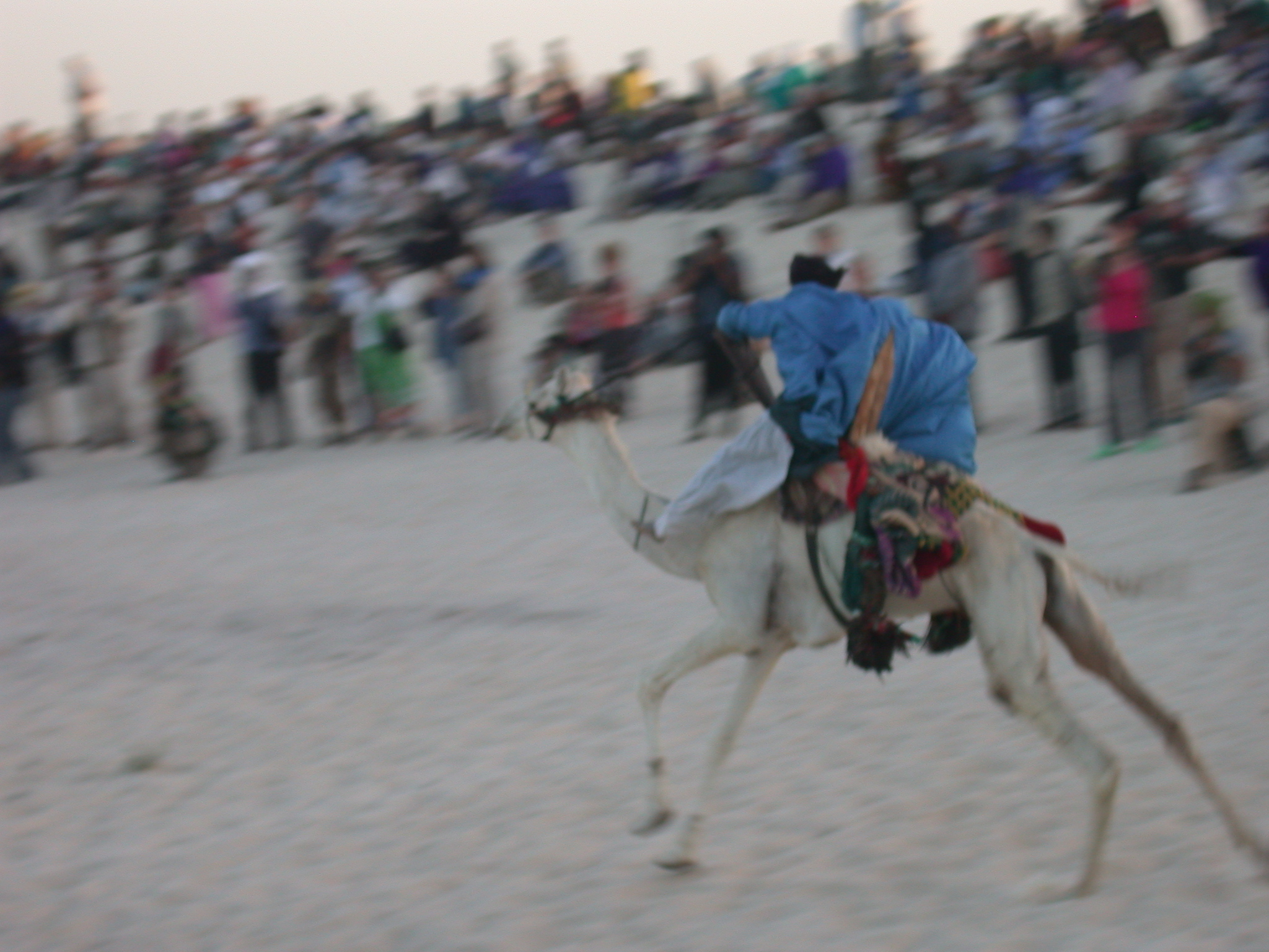 Camel Racing, Festival in the Desert, Essakane, Mali