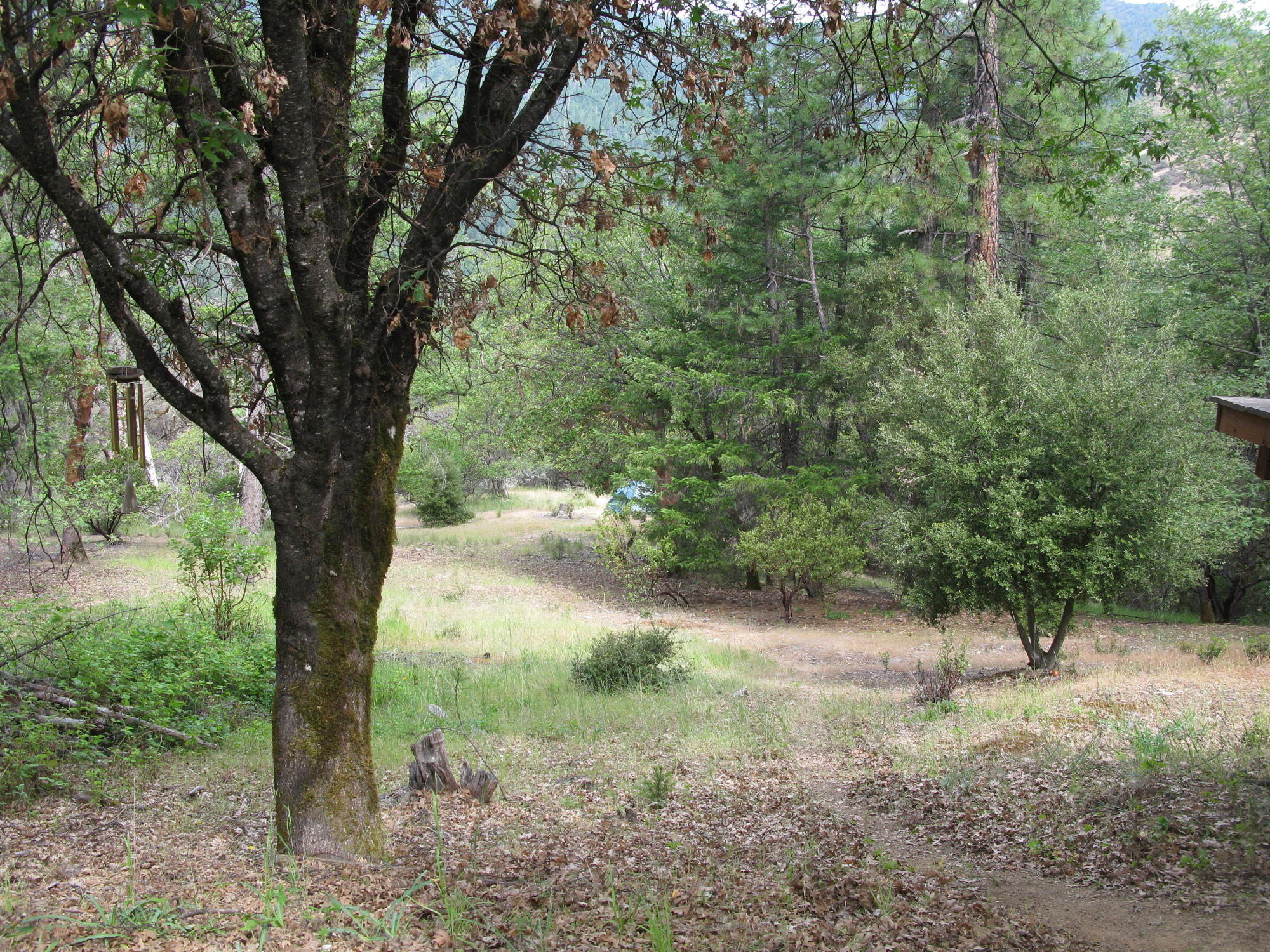 Woods Downslope From Cabin, Covelo Yoga and Healing Festival