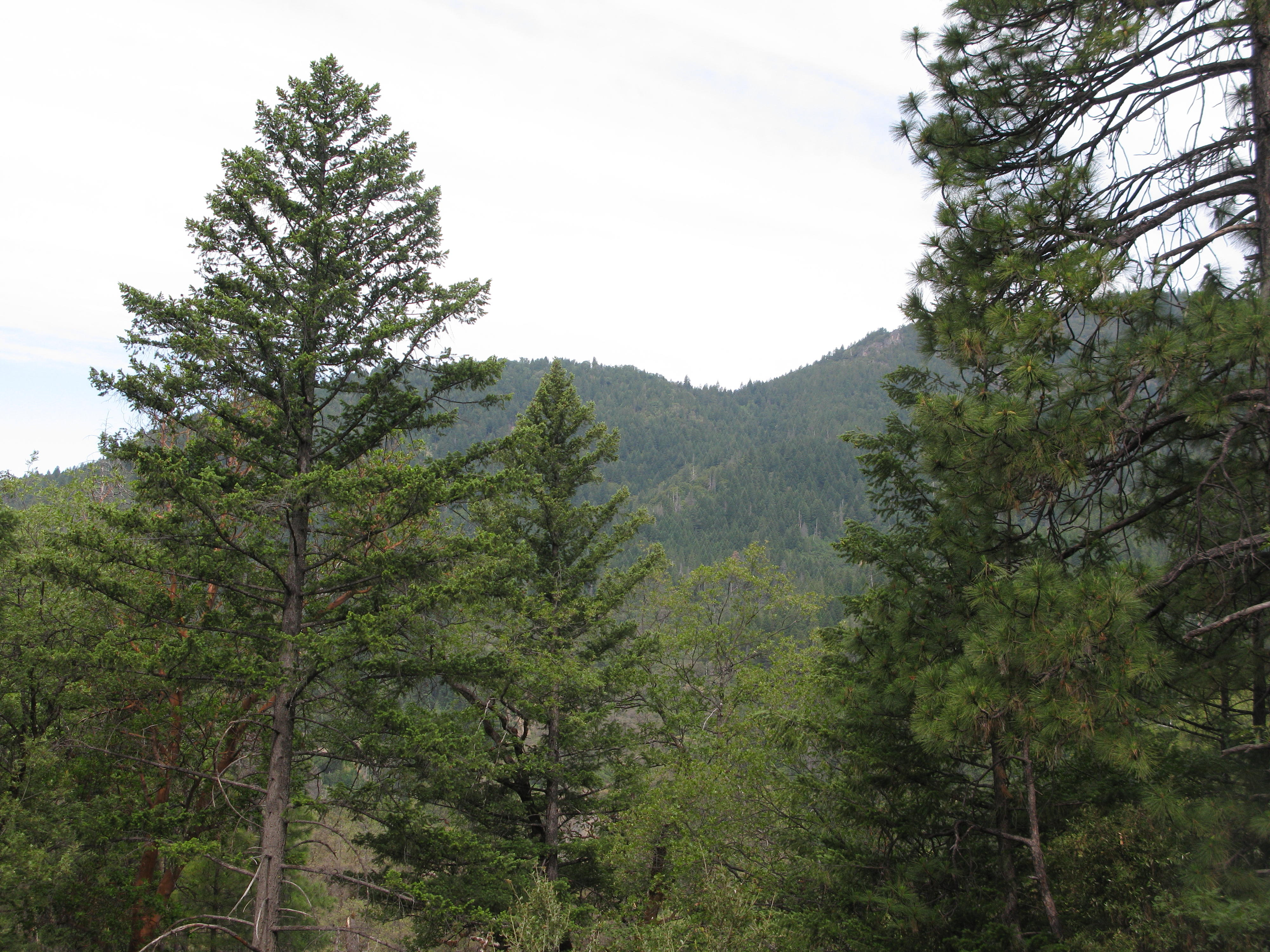 View From Cabin, Covelo Yoga and Healing Festival