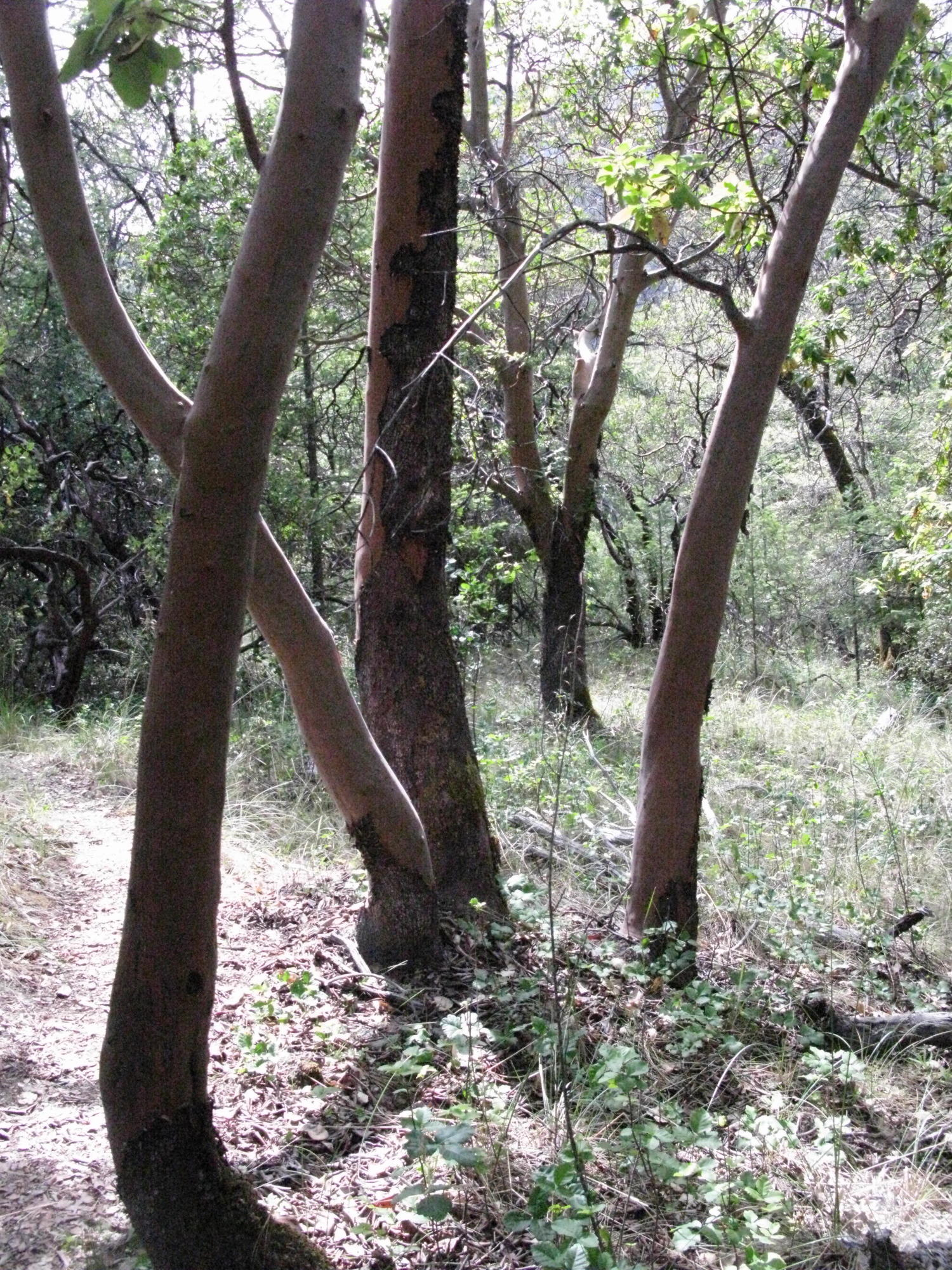 Trail to the Eel River, Covelo Yoga and Healing Festival