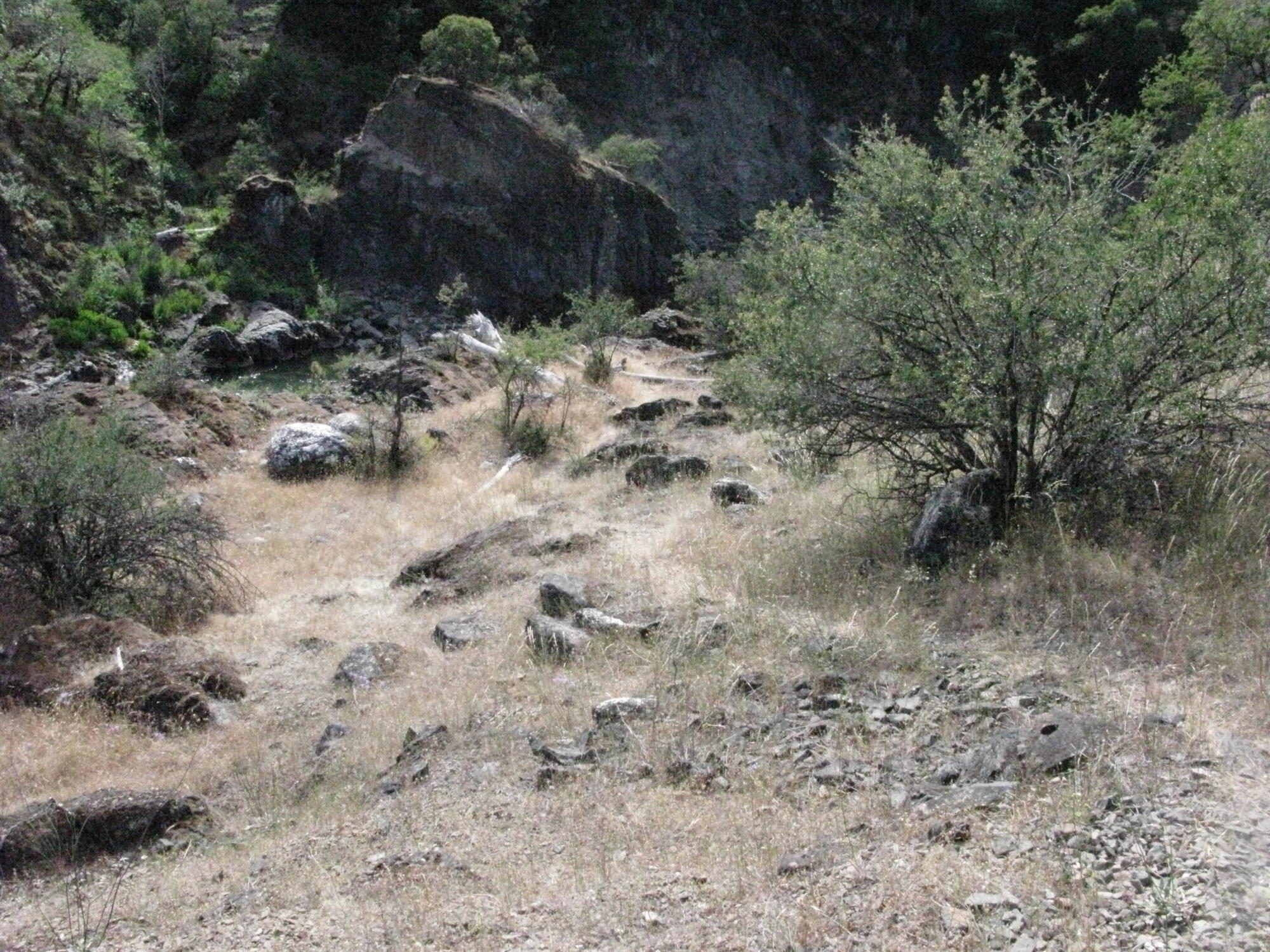 Rattlesnake Territory on Trail to the Eel River, Covelo Yoga and Healing Festival