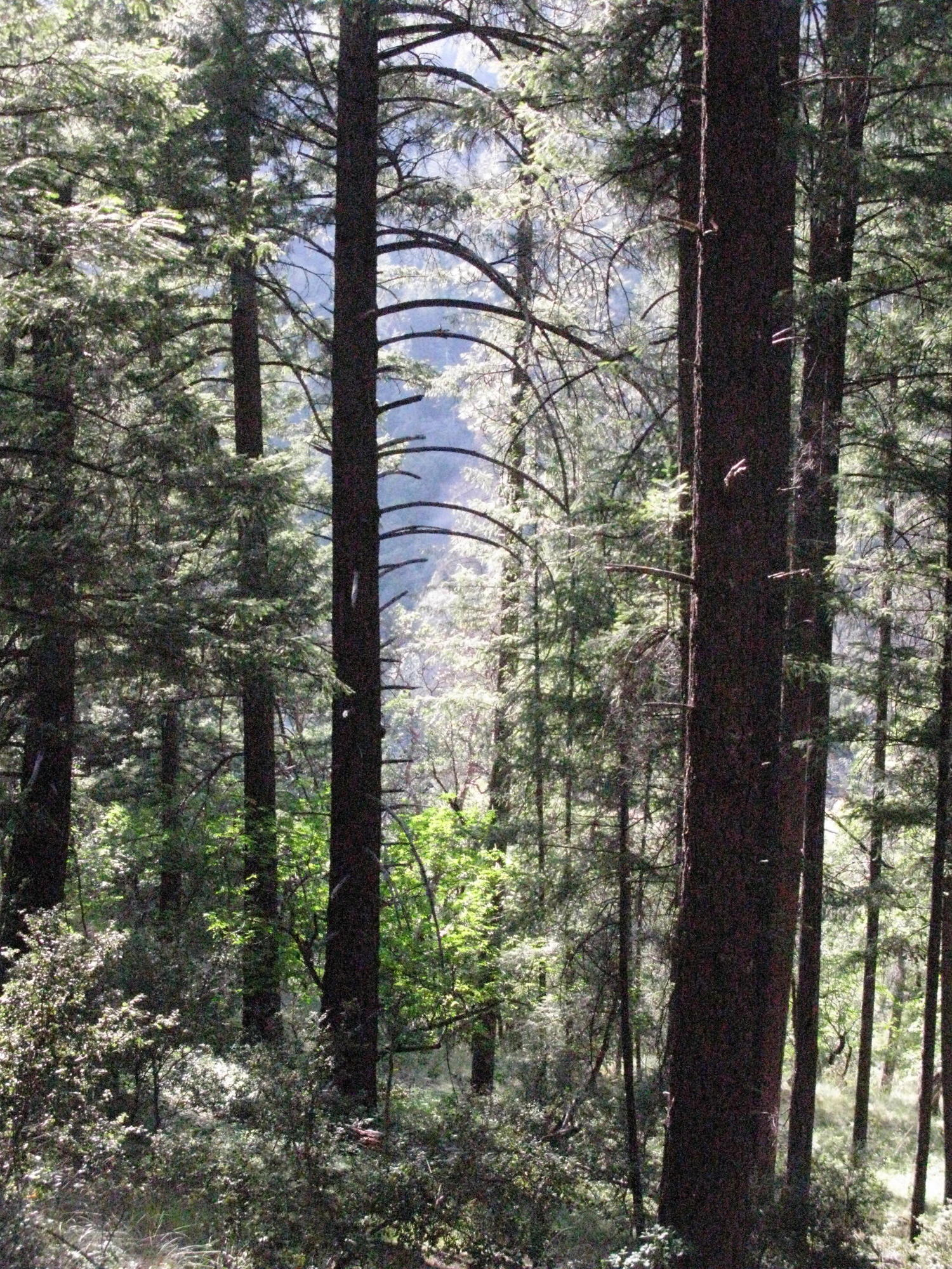 Forest on Trail to the Eel River, Covelo Yoga and Healing Festival