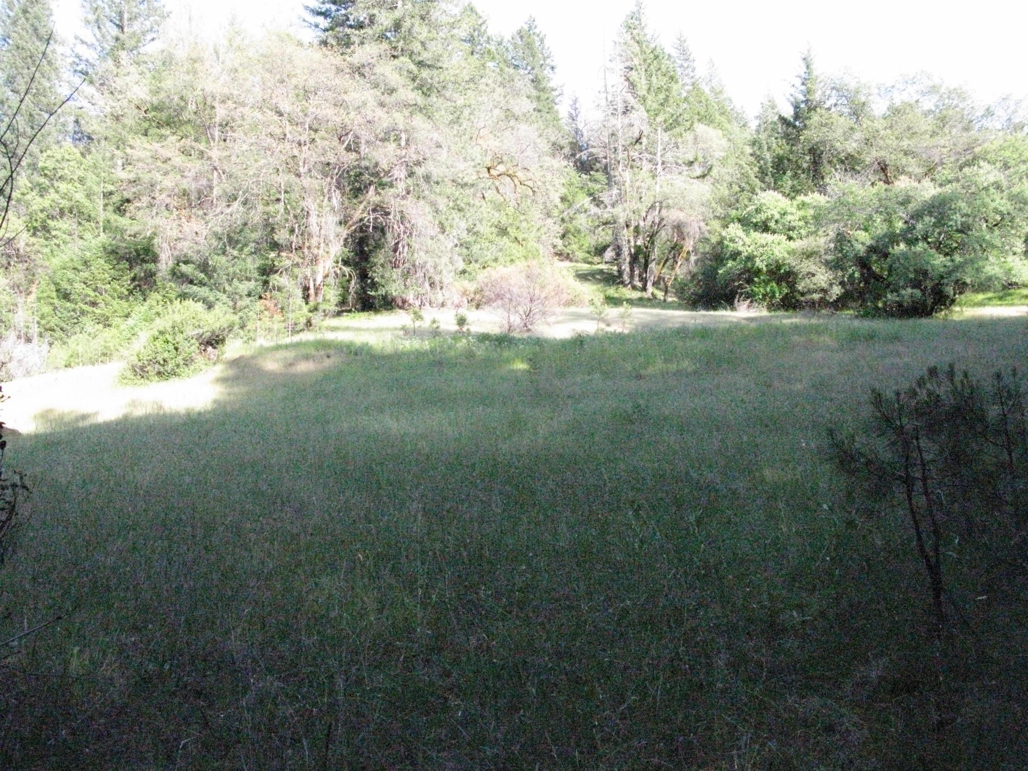 Meadow on Trail to the Eel River, Covelo Yoga and Healing Festival