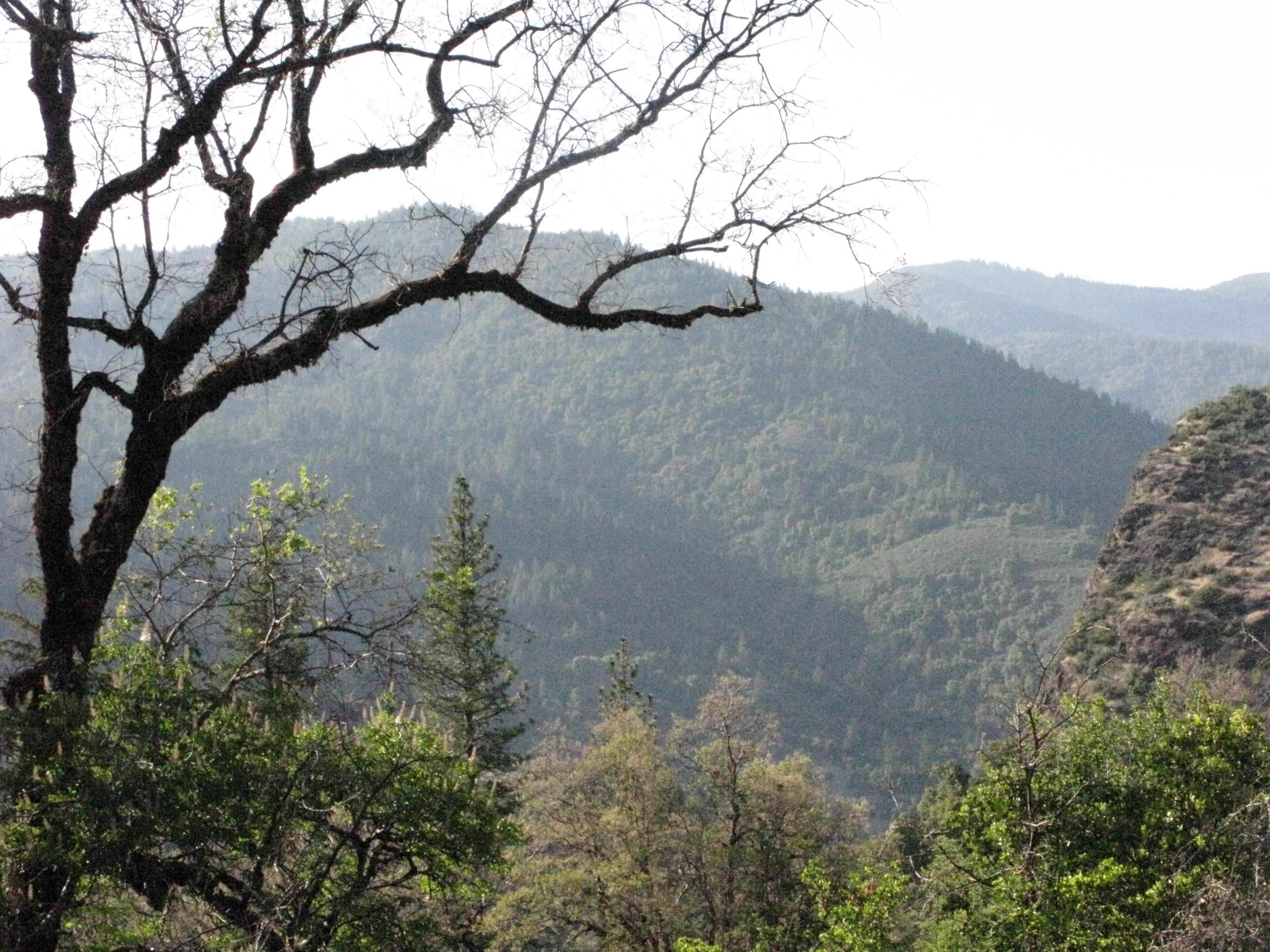View From Trail to the Eel River, Covelo Yoga and Healing Festival