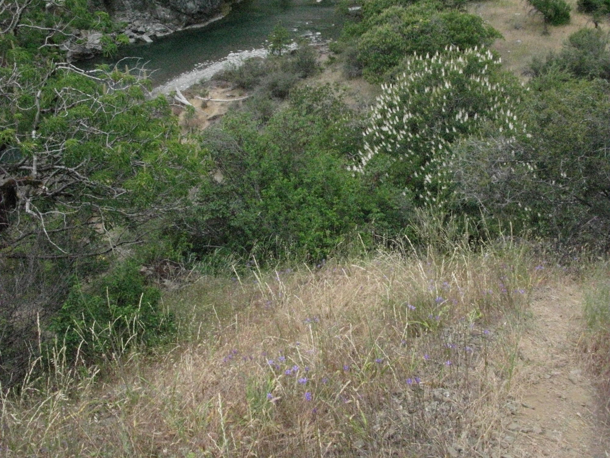 View of Eel River, Covelo Yoga and Healing Festival