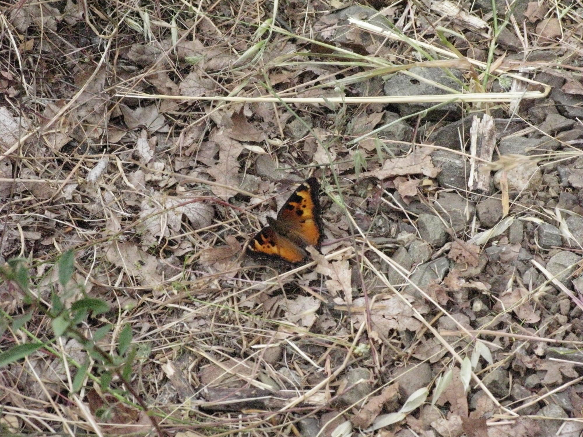 Butterfly on Trail to the Eel River, Covelo Yoga and Healing Festival
