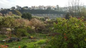Alameny Farm